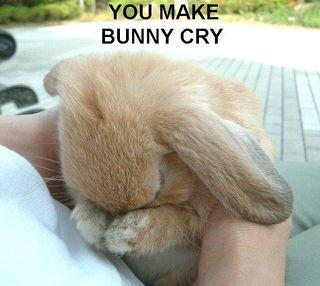 You-make-bunny-cry