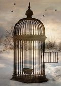 Limits-freedom