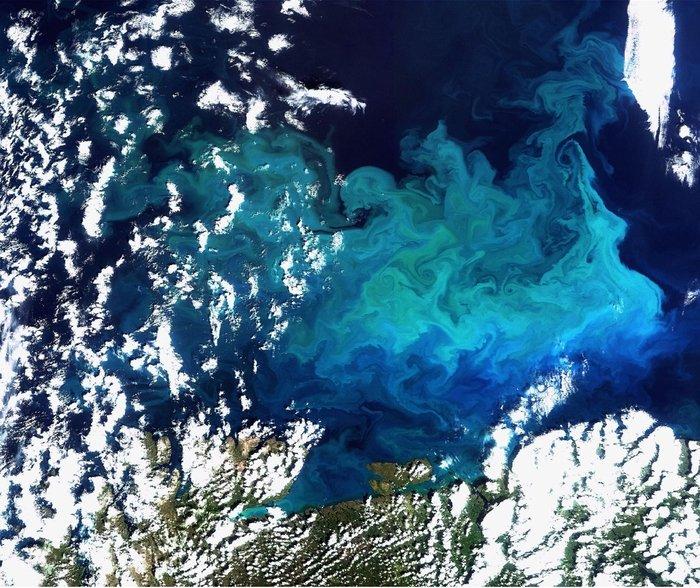 Algae_bloom_in_the_Arctic_MERIS_node_full_image_2